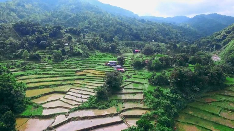 rice terraces2